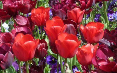 Ode aan de bloem